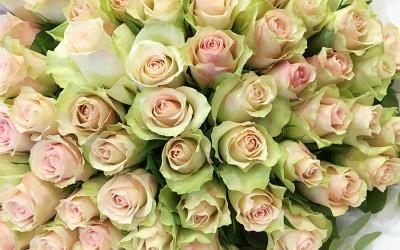 Bouquet 95