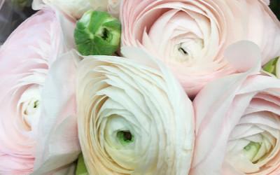Bouquet 74