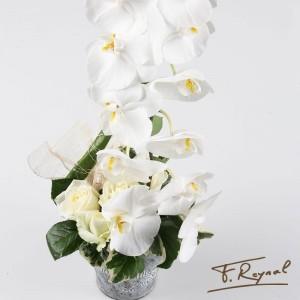 orchidee-blanche-bordeaux