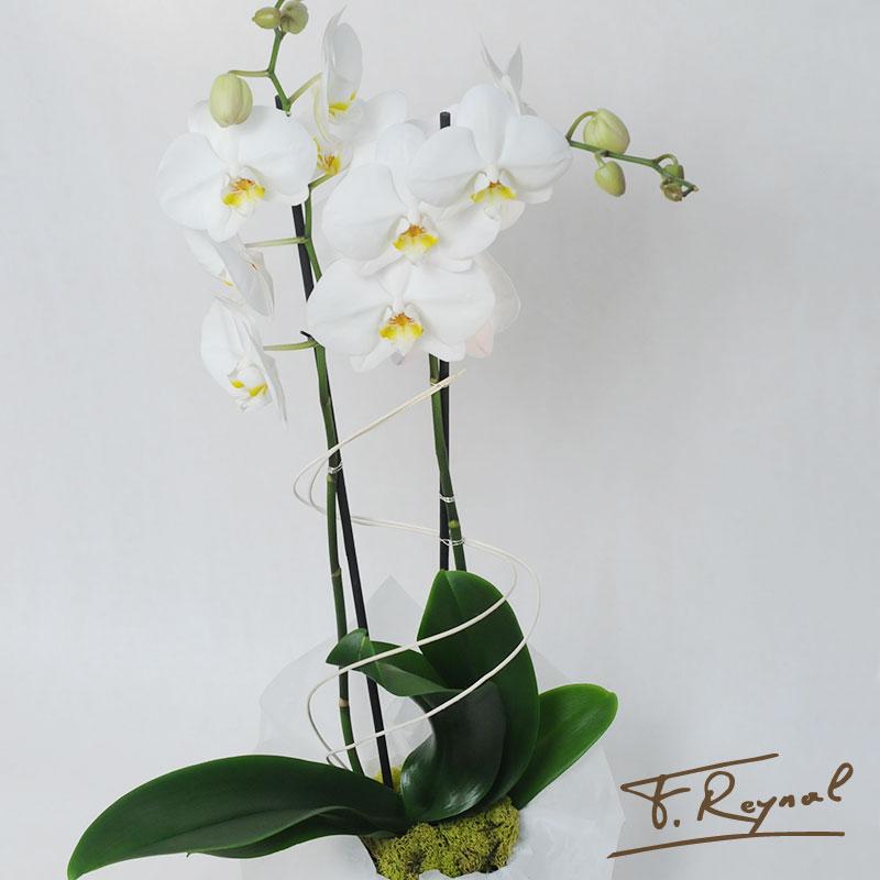 Notre gamme de bouquets fleurs plantes pour tous les budgets for Plante pour tous