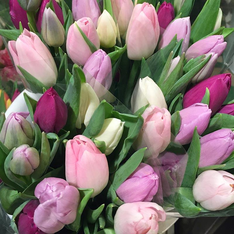 tulipe_roses