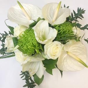amaryllis-blanc