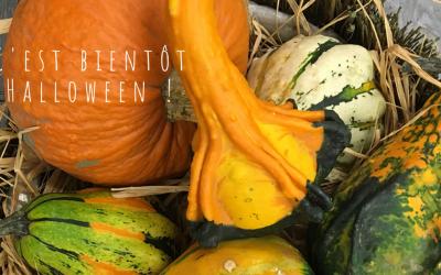Des compositions pour fêter Halloween