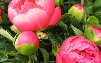 Bouquet 98
