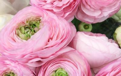 Bouquet 78