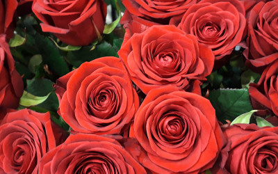 Bouquet 54